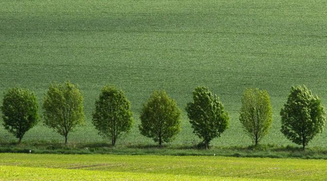 Folia : une application pour reconnaître les arbres